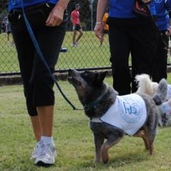 Canine & Equestrian Training